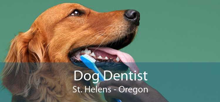 Dog Dentist St. Helens - Oregon