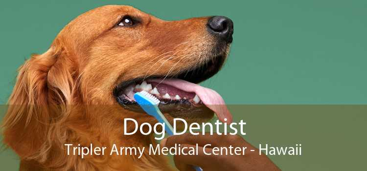 Dog Dentist Tripler Army Medical Center - Hawaii
