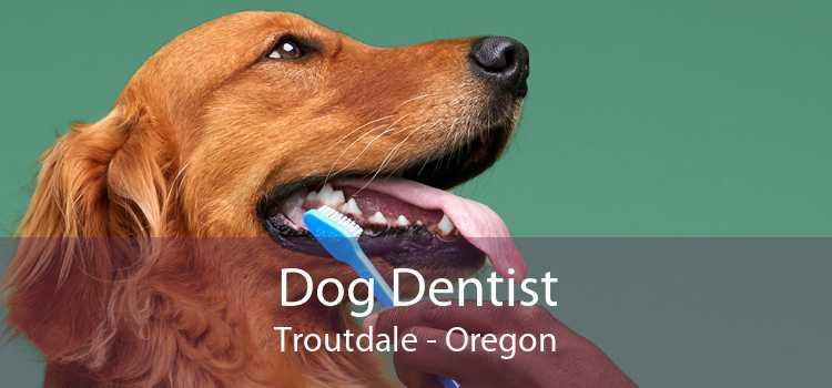 Dog Dentist Troutdale - Oregon