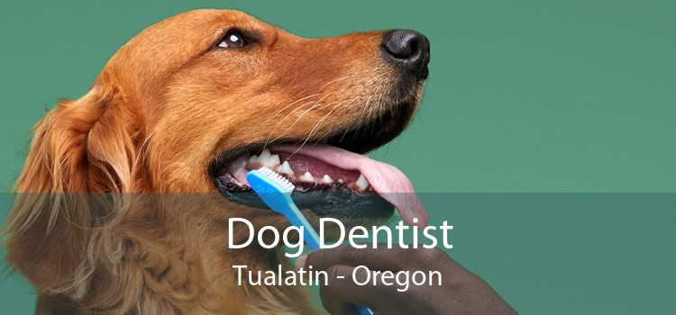 Dog Dentist Tualatin - Oregon