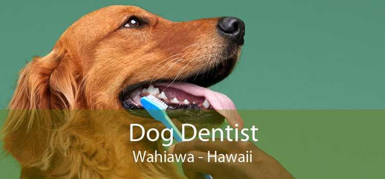 Dog Dentist Wahiawa - Hawaii