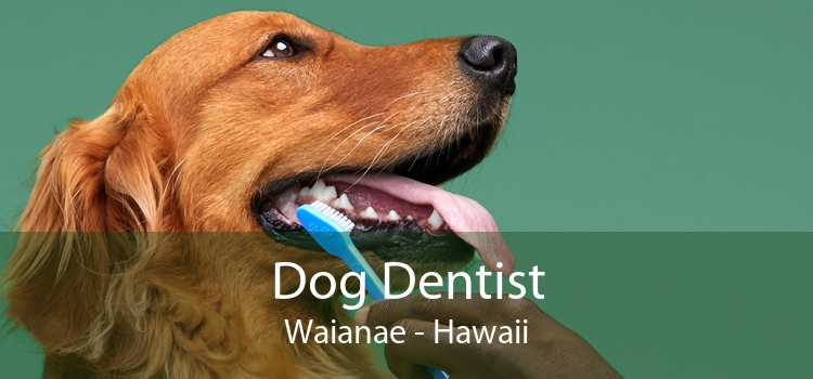 Dog Dentist Waianae - Hawaii