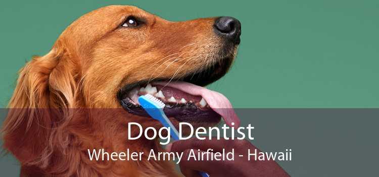 Dog Dentist Wheeler Army Airfield - Hawaii