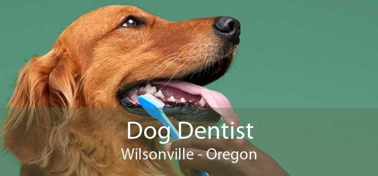 Dog Dentist Wilsonville - Oregon