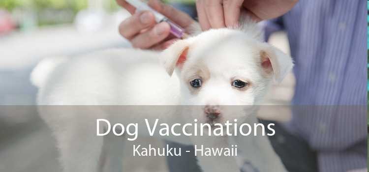 Dog Vaccinations Kahuku - Hawaii