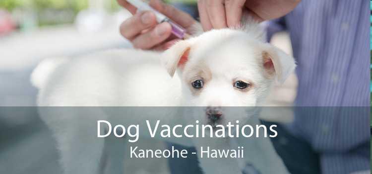 Dog Vaccinations Kaneohe - Hawaii