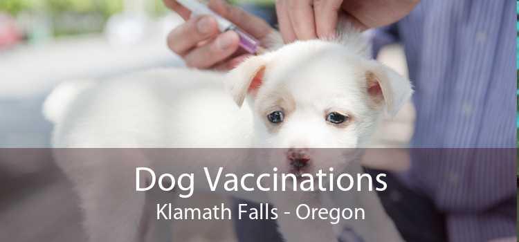 Dog Vaccinations Klamath Falls - Oregon