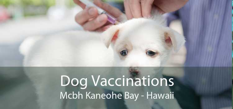 Dog Vaccinations Mcbh Kaneohe Bay - Hawaii