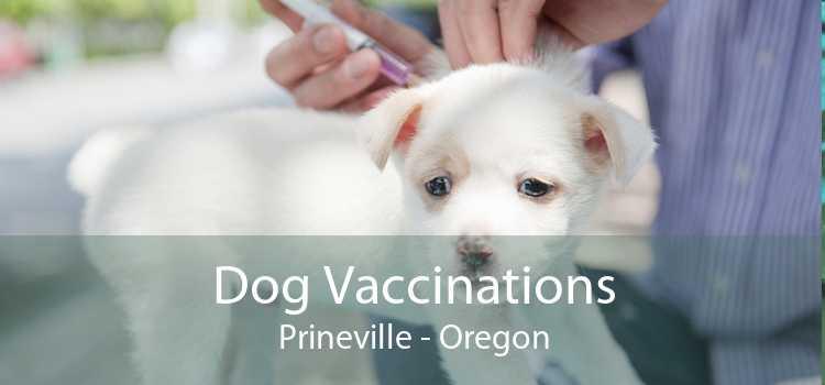 Dog Vaccinations Prineville - Oregon