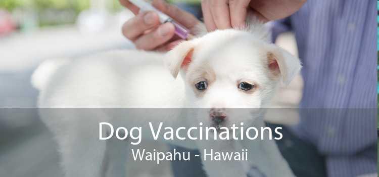 Dog Vaccinations Waipahu - Hawaii