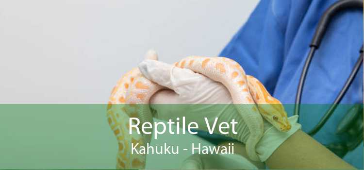 Reptile Vet Kahuku - Hawaii