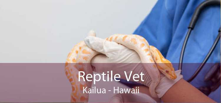 Reptile Vet Kailua - Hawaii
