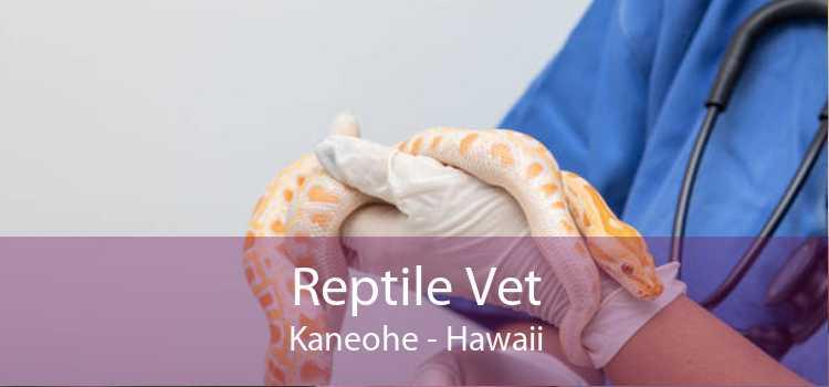 Reptile Vet Kaneohe - Hawaii