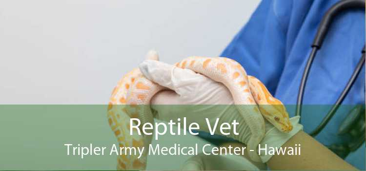 Reptile Vet Tripler Army Medical Center - Hawaii