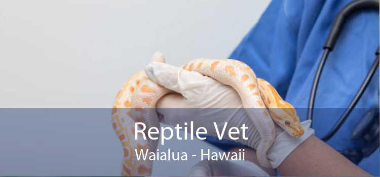 Reptile Vet Waialua - Hawaii