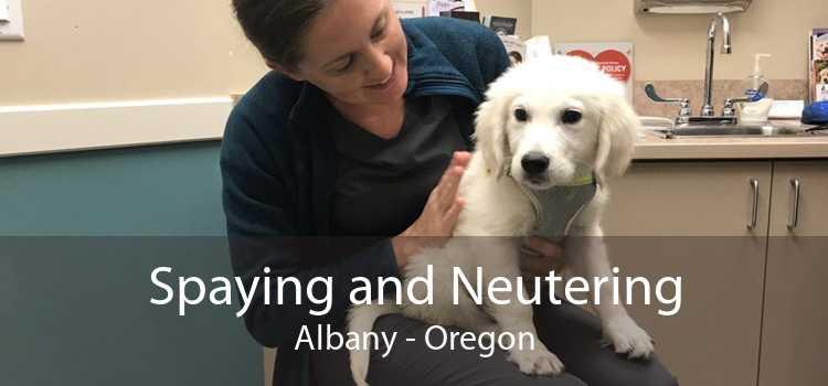 Spaying and Neutering Albany - Oregon