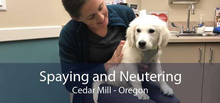 Spaying and Neutering Cedar Mill - Oregon