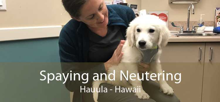 Spaying and Neutering Hauula - Hawaii