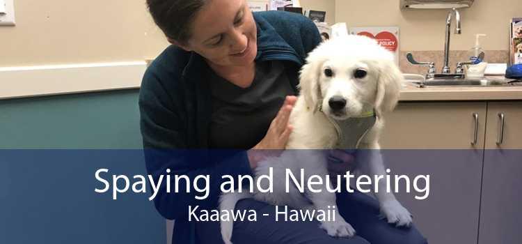 Spaying and Neutering Kaaawa - Hawaii