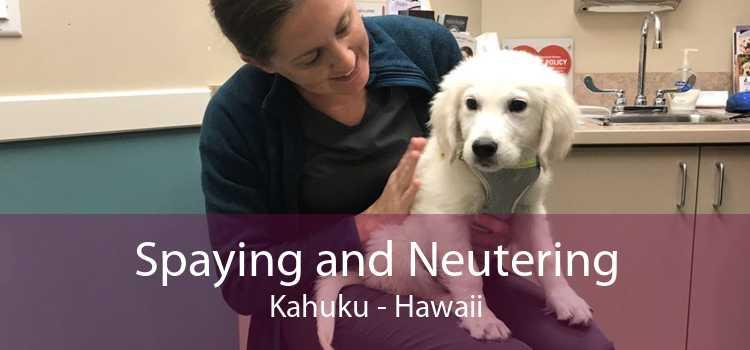 Spaying and Neutering Kahuku - Hawaii