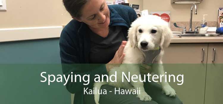 Spaying and Neutering Kailua - Hawaii
