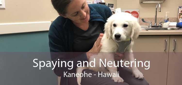 Spaying and Neutering Kaneohe - Hawaii