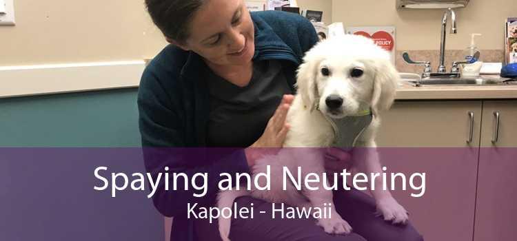 Spaying and Neutering Kapolei - Hawaii