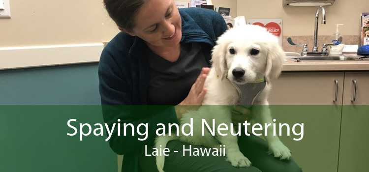 Spaying and Neutering Laie - Hawaii
