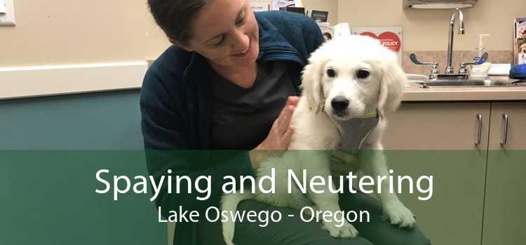 Spaying and Neutering Lake Oswego - Oregon
