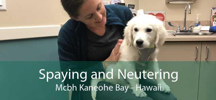 Spaying and Neutering Mcbh Kaneohe Bay - Hawaii