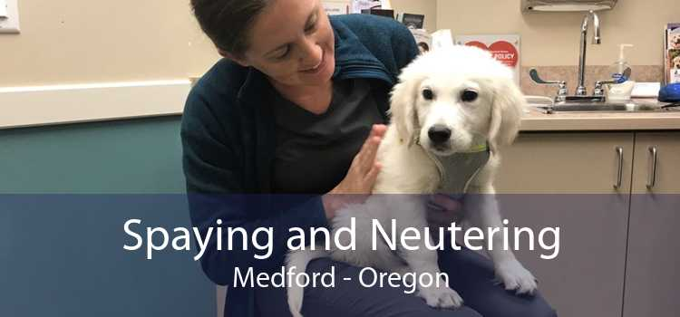 Spaying and Neutering Medford - Oregon