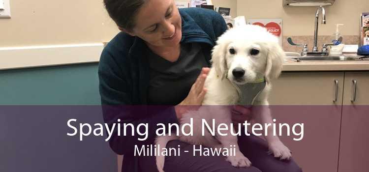 Spaying and Neutering Mililani - Hawaii
