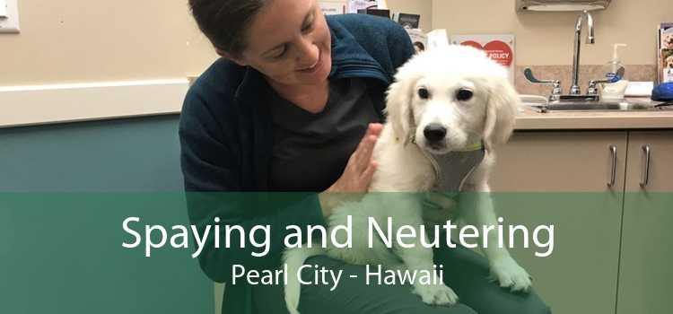Spaying and Neutering Pearl City - Hawaii