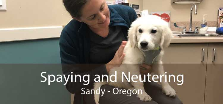 Spaying and Neutering Sandy - Oregon