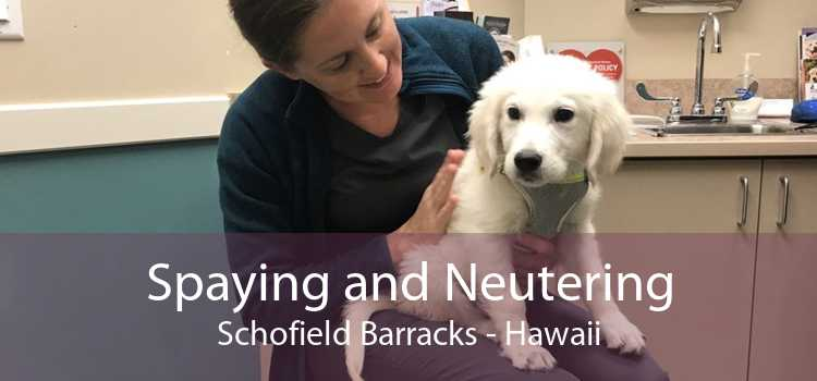 Spaying and Neutering Schofield Barracks - Hawaii