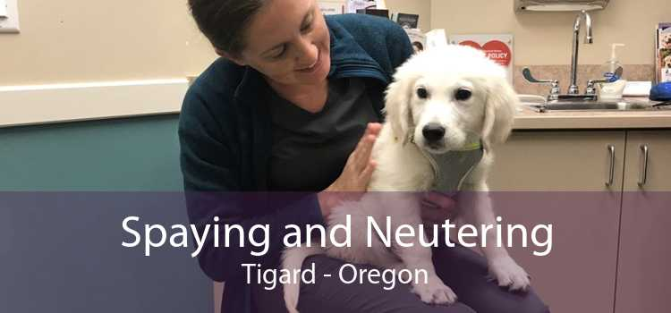 Spaying and Neutering Tigard - Oregon