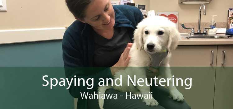 Spaying and Neutering Wahiawa - Hawaii