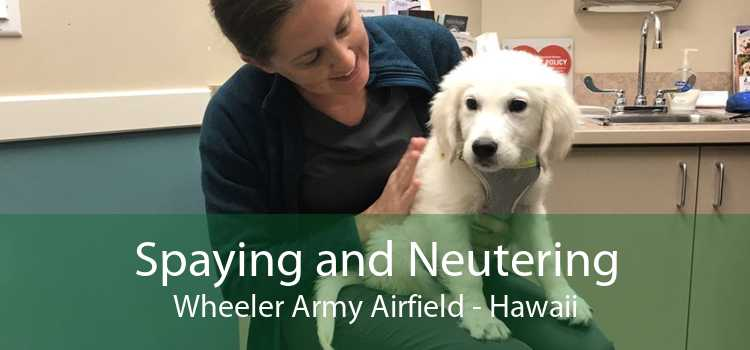 Spaying and Neutering Wheeler Army Airfield - Hawaii